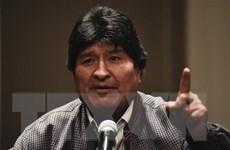 Bolivia: Ông Morales công bố ứng cử viên tổng thống của đảng MAS