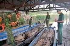 An Giang: Bắt giữ gần 1 tấn lợn nhập lậu từ Campuchia vào Việt Nam