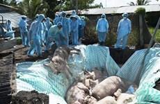Việt Nam và Hoa Kỳ hợp tác nghiên cứu vắcxin dịch tả lợn châu Phi