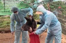Thanh Hóa khẩn trương dập dịch cúm gia cầm A/H5N6