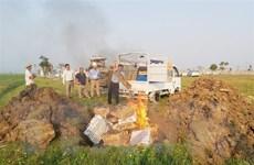 Phát hiện 7.000 con gia cầm ủ rũ tại ổ dịch H5N6 ở Nghệ An