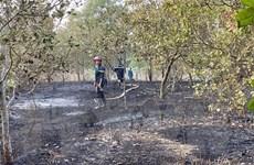 Bình Phước: Lửa thiêu rụi 3 ha điều đang cho thu hoạch ở Lộc Ninh
