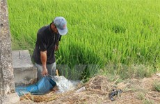 Xâm nhập mặn ở Đồng bằng sông Cửu Long diễn ra gay gắt trong tháng 3