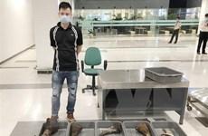 Bắt gần 30kg nghi sừng tê giác trên chuyến bay chuyển hướng vì dịch
