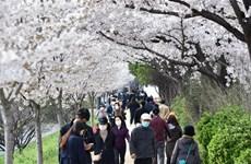 Hàn Quốc công bố phương án hỗ trợ khẩn cấp cho 70% hộ gia đình