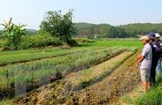 Dự báo nhiều diện tích canh tác ở Trung bộ sẽ không đủ nguồn nước tưới