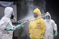 Brazil ghi nhận số ca tử vong do COVID-19 vượt mốc 1.000 người
