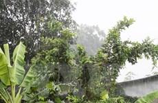 Mưa 'vàng' giải nhiệt cho ĐBSCL giữa cao điểm hạn mặn