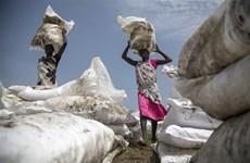 WFP: Mất an ninh lương thực có thể trầm trọng thêm do COVID-19