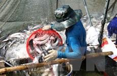 Ngành hàng cá tra có khả năng phục hồi hoàn toàn từ quý 3