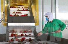 Doanh nghiệp xuất khẩu nông sản chủ động thích ứng tình hình mới