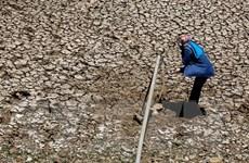 Tập trung ứng phó hạn hán và xâm nhập mặn tại Trung Bộ và Tây Nguyên