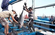 Gỡ khó cho các doanh nghiệp xuất khẩu mặt hàng cá ngừ