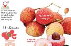 [Infographics] Độc lạ đặc sản vải trứng của tỉnh Hưng Yên