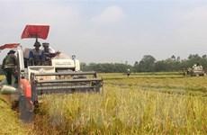 Kết nối doanh nghiệp với nông dân để giảm giá thành sản xuất lúa