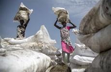 Tổng Thư ký LHQ cảnh báo nguy cơ mất an ninh lương thực toàn cầu