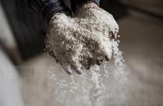 Thị trường nông sản tuần qua: Giá nhiều loại nông sản giảm