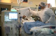 Số người tử vong do COVID-19 tại Brazil vượt 80.000 người