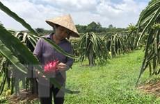 Vĩnh Phúc hỗ trợ nông dân ứng dụng kỹ thuật mới vào sản xuất