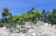 Ninh Thuận nâng cao độ che phủ rừng, bảo tồn đa dạng sinh học