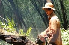 Tập trung cưa cắt cây cao su trong vùng dự án Sân bay Long Thành