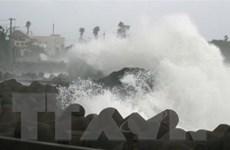 Bão Maysak gây thiệt hại lớn tại Nhật Bản và Trung Quốc