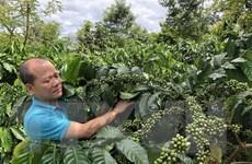 Thực thi EVFTA: Khẳng định chất lượng nông sản Việt Nam