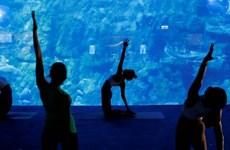 Cơ hội trải nghiệm lớp học yoga giữa 'lòng đại dương'