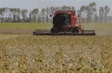 FAO: Chỉ số giá lương thực thế giới tăng 5% trong tháng 9
