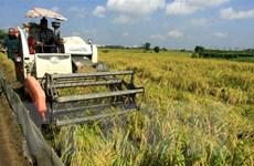 Thị trường nông sản tuần qua: Giá lúa ổn định, càphê phục hồi