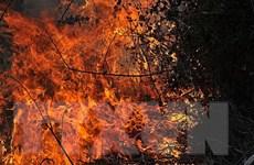 25.000 người bỏ nhà cửa do cháy rừng, Syria ban bố tình trạng thảm họa