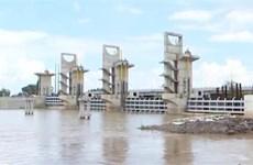 Vận hành xả cống kiểm soát lũ sông Cửu Long và Tứ Giác Long Xuyên
