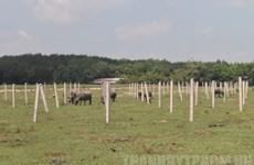 TP.HCM công khai 108 dự án không thực hiện đúng kế hoạch sử dụng đất