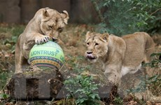 Quy mô của các loài vật hoang dã không sụt giảm như quan ngại