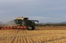 Xuất khẩu nông sản của Australia thiệt hại gần 2,5 tỷ USD năm 2020