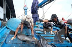 Bảo tồn là biện pháp phát triển nguồn lợi thủy sản bền vững
