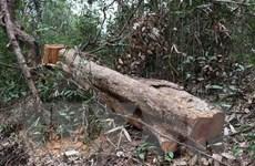 Lõi rừng đặc dụng Mường Phăng bị 'rút ruột': 173 cây gỗ bị chặt hạ