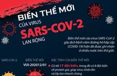 [Infographics] Biến thể mới của virus SARS-CoV-2 lan rộng