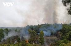 Quảng Ninh: Dập tắt đám cháy rừng ở thành phố Hạ Long