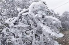 Yên Bái: Nhiệt độ xuống thấp, đỉnh đèo Khau Phạ xuất hiện băng giá