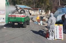 Hàn Quốc tiêu hủy hàng loạt gia cầm nhằm tránh dịch cúm độc lực cao