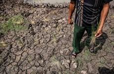 Xâm nhập mặn ở khu vực Nam Bộ diễn biến phức tạp dịp giáp Tết