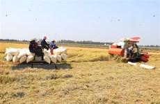 Thị trường nông sản tuần qua: Giá lúa tăng nhẹ, càphê quay đầu giảm