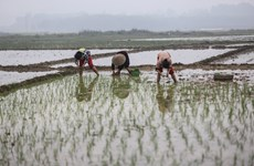 Đất nước luôn đồng hành cùng nông nghiệp, nông dân và nông thôn