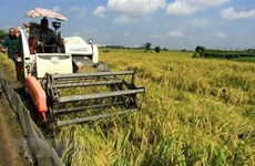 Xuất khẩu gạo của Việt Nam kỳ vọng sớm khởi sắc trong năm 2021