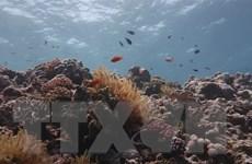 Australia phạt tàu nước ngoài đổ rác tại rạn san hô Di sản Thế giới
