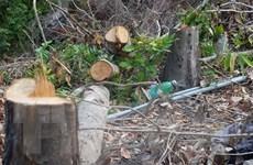 Khánh Hòa: Vụ rừng xã Suối Tân bị chặt phá có dấu hiệu tội hủy hoại