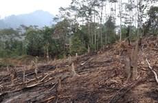 Điện Biên: Báo động thực trạng 'khai tử' rừng tái sinh ở huyện Nậm Pồ