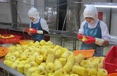 Hợp tác với doanh nghiệp chế biến: Điểm tựa tiêu thụ nông sản bền vững