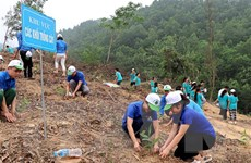 Phê duyệt Đề án trồng 1 tỷ cây xanh giai đoạn 2021-2025